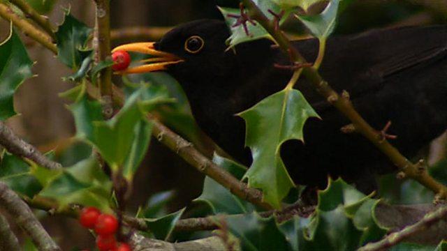 Garden bird identity