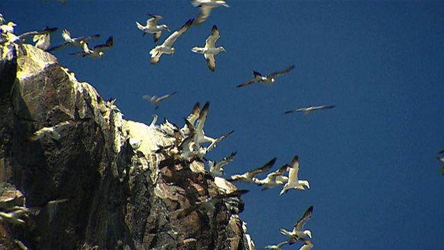 Seabird Serengeti