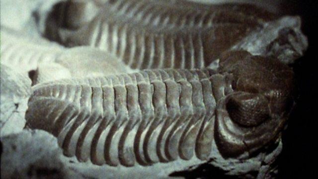 Trilobite types