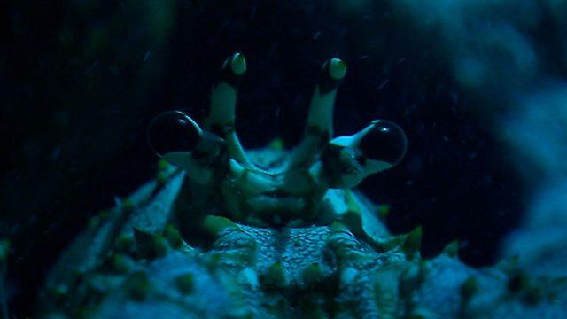 Lobster retreat