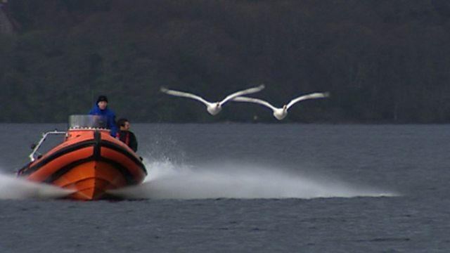 Slipstream swans