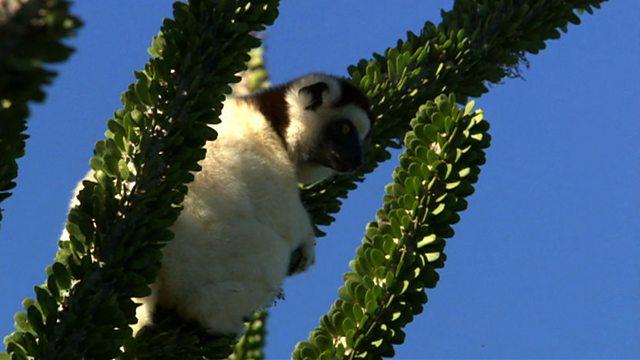 Madagascar mystery