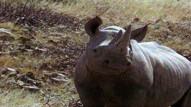 Tracking rhinos