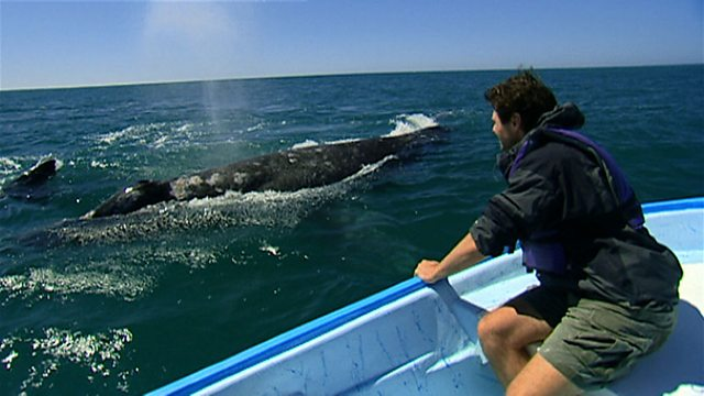 Whales in training