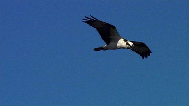 Osprey navigation