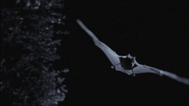 Farmland bats