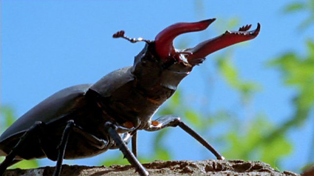 A stag beetle's history of Britain