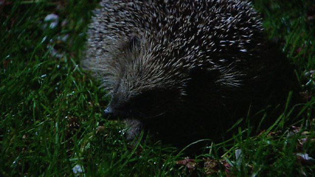 A hedgehog's history of Britain