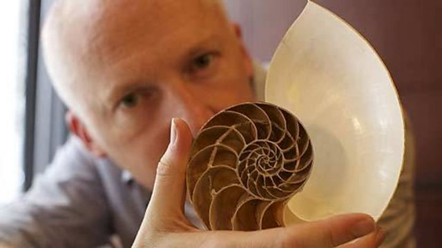 The secrets of the nautilus shell