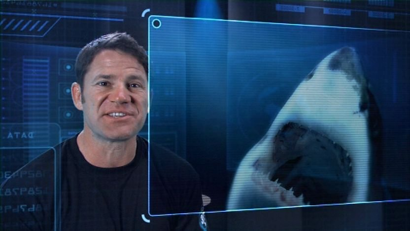 Steve Backshall looking at a Great White Shark.