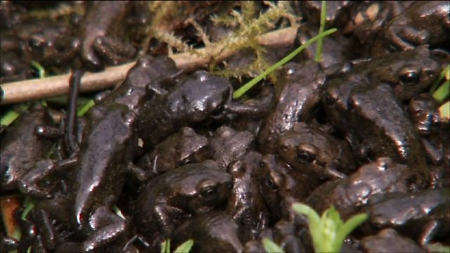 Loads of toads!