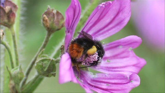 Bumblebee brush