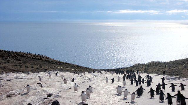 Timelapse penguins