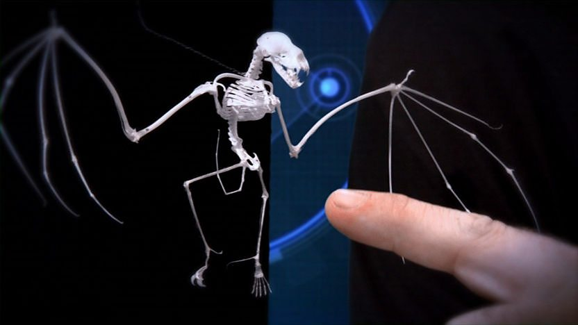 A bat skeleton.