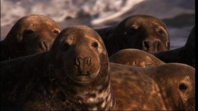 Secret seals