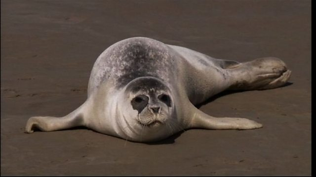 Kentish seals