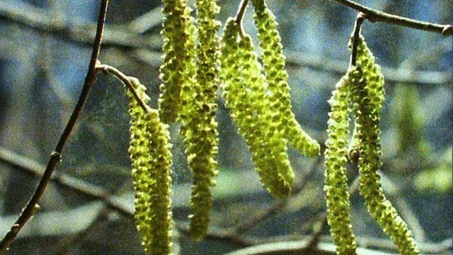 Catkins and flowers