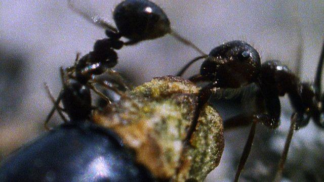 Ant aid