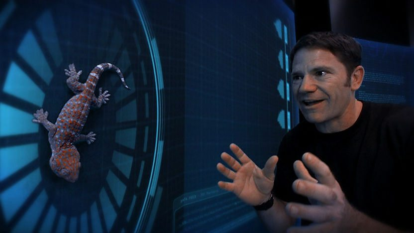 Steve Backshall and a Gecko.