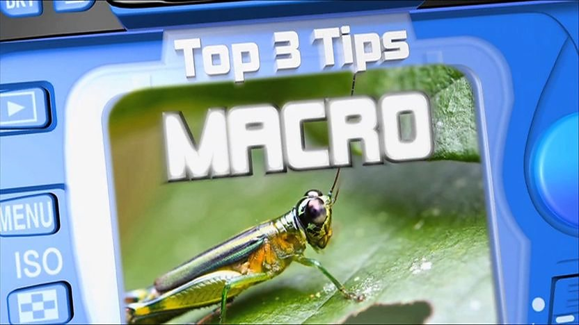 A macro picture of an amazon tree frog in the viewfinder of a blue camera with the word 'Macro'.