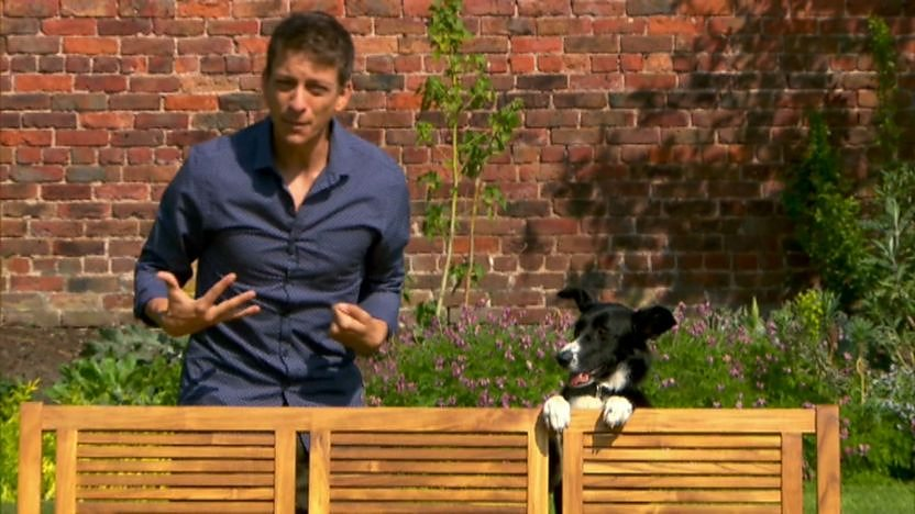 zac (presenter) and dog