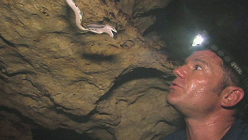 Steve Backshall looking at a snake in a cave