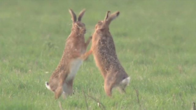 March hare madness