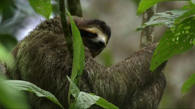 Why sloths are weird
