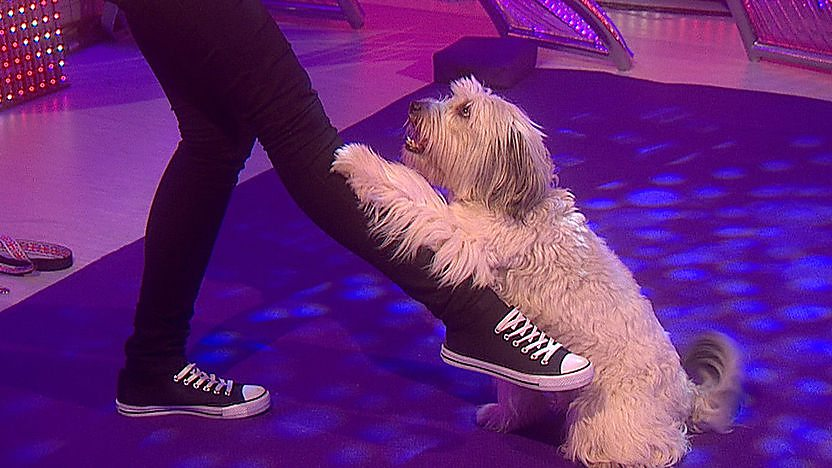 Pudsey the dog from Britain's Got Talent performing a trick with his paw.