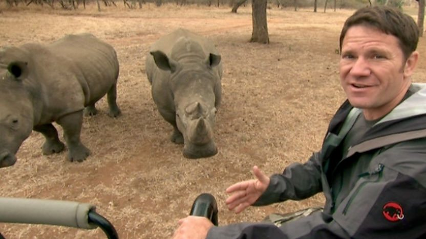 White rhino success story