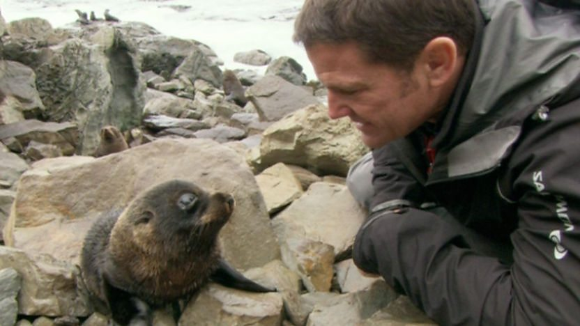 Steve meets a v cute seal pup