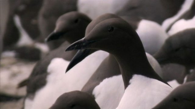 Seabird cities