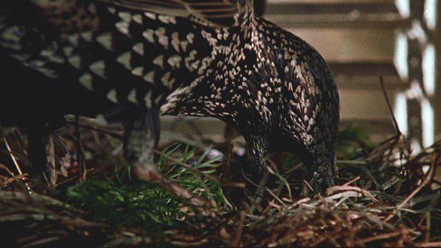 Avian aromatherapy