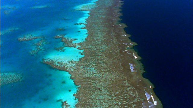 Reef record