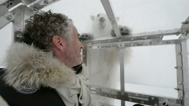 Close encounter with a polar bear