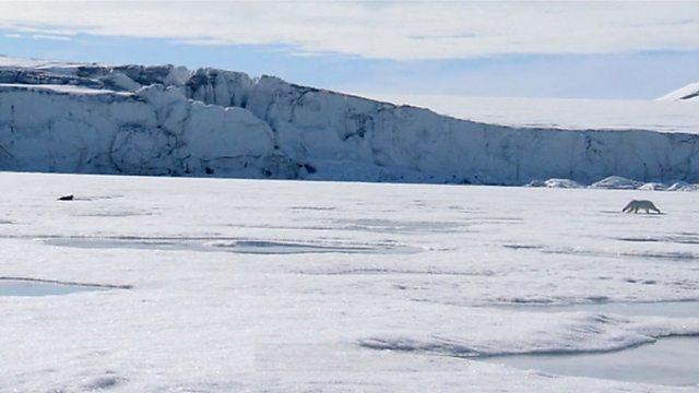 Polar bear hunting