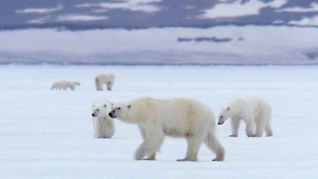 Polar bear central