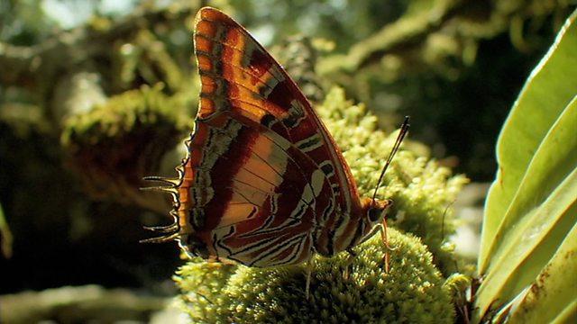 Butterfly ball