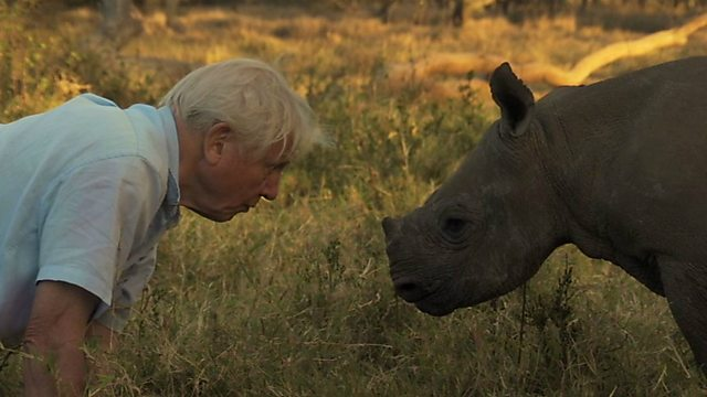 Sir David and the baby rhino