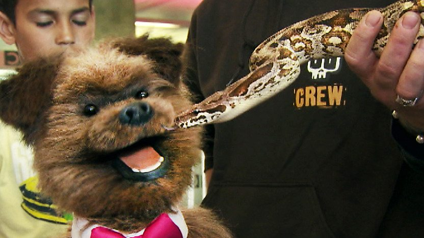 Hacker T Dog looking worried next to a snake.