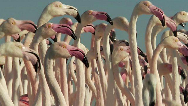 Flamingos in Dubai