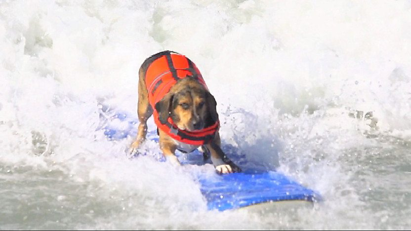 dog on a surf board