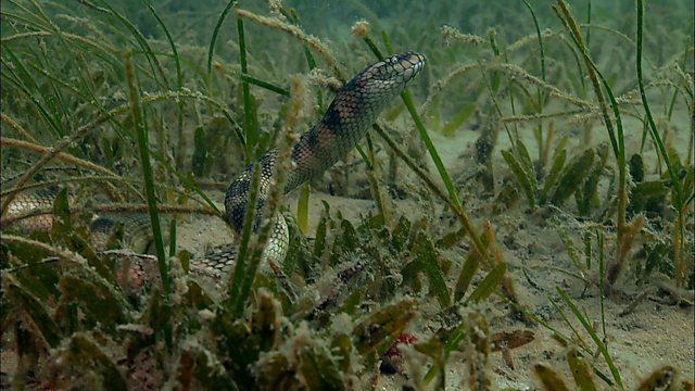 Underwater grassland