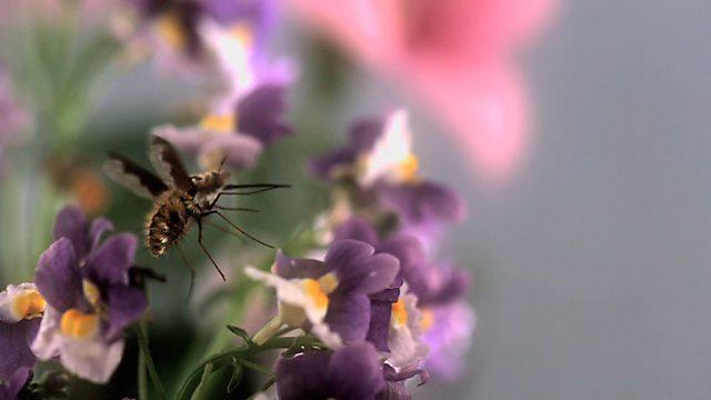 Beesquitos