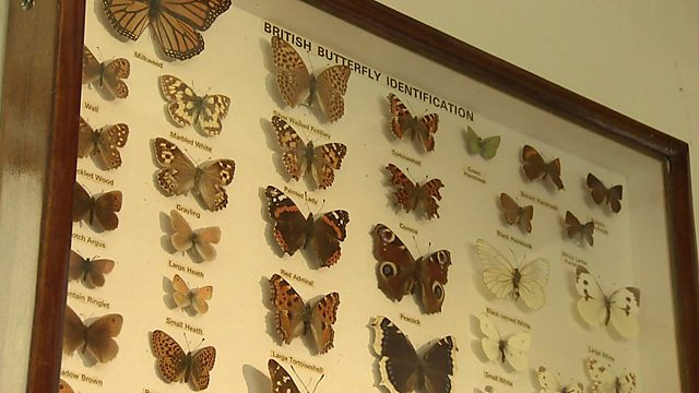 Web exclusive: The differences between moths and butterflies