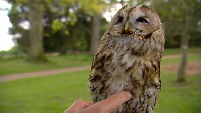 What owls can teach us about moles