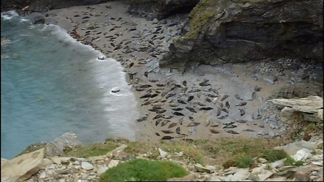 Moulting seals