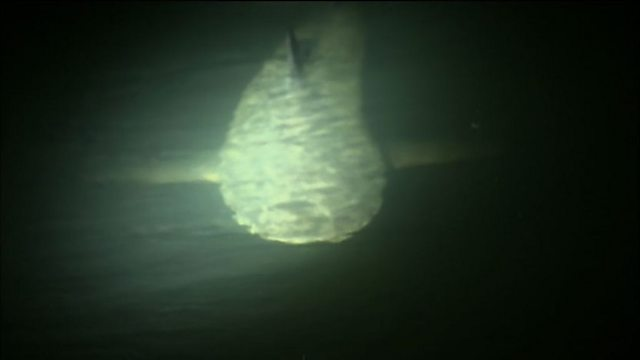 Bull sharks at night
