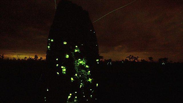 Lethal light show