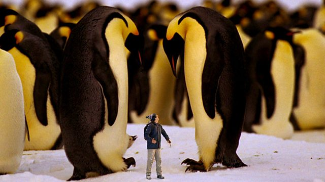 Andy's Wild Adventures: Series 1: Emperor Penguins